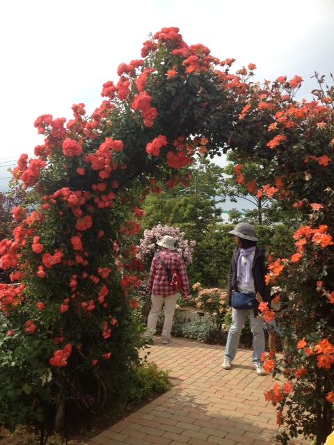 花菜ガーデン2